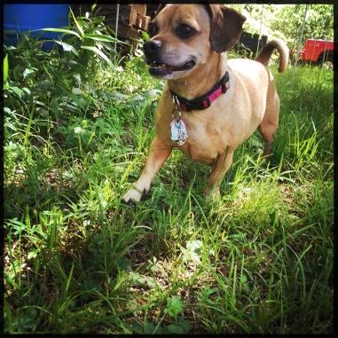 Sissy Walks Through Grass
